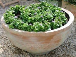 Thames Bowl Fibreglass Planter Alt
