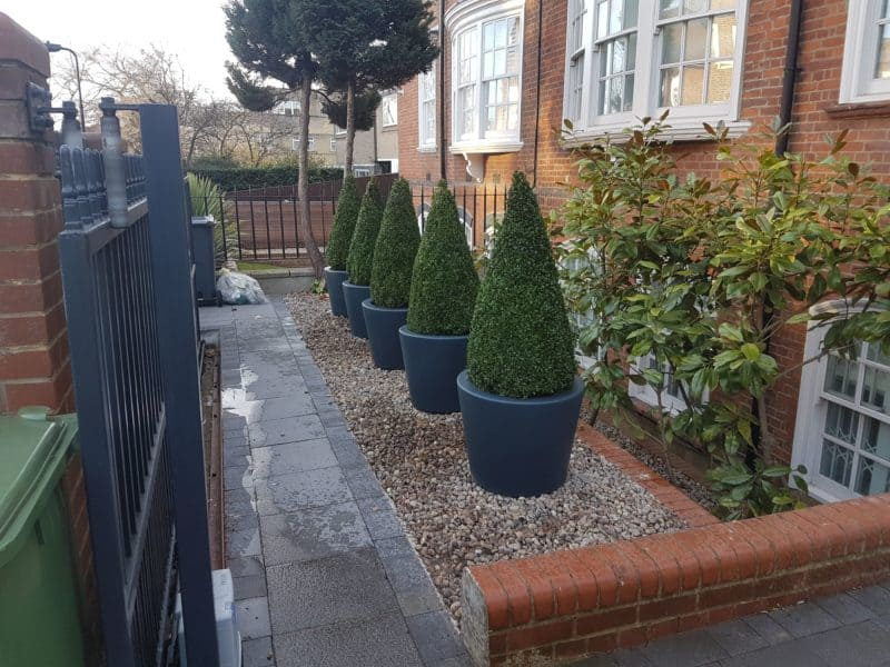 Acer Tapered Column Adezz Fibreglass Planter Ral 7016 Planted With Buxus Cone Alt 1