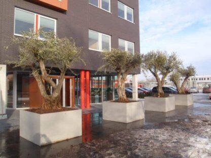 Banco Cube Adezz Polymer Concrete Planter Alt 2