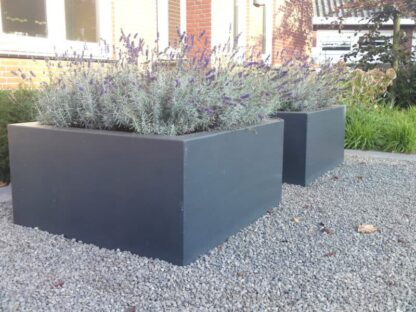 Buxus Low Cube | Adezz Fibreglass Planter