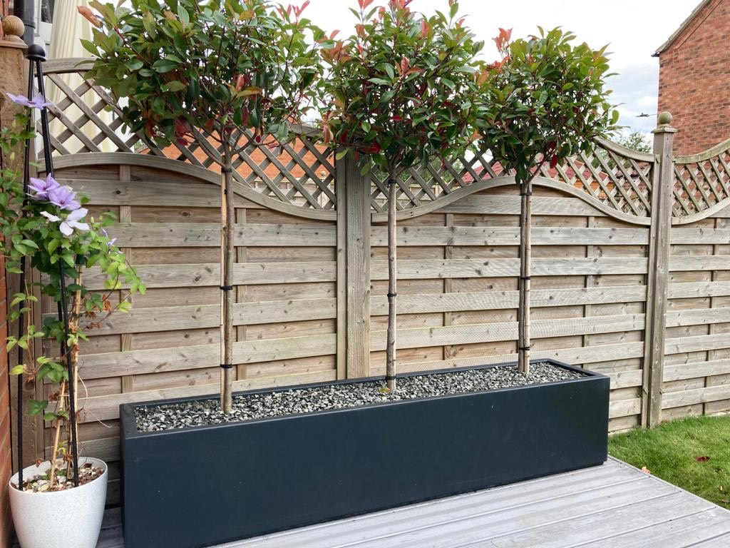Fibreglass Buxus Planter customer photo