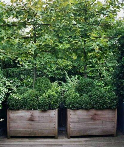 Sevilla Cube Adezz Hardwood Planters Alt 2