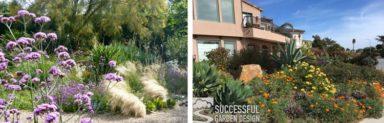 drought-tolerant-gardens