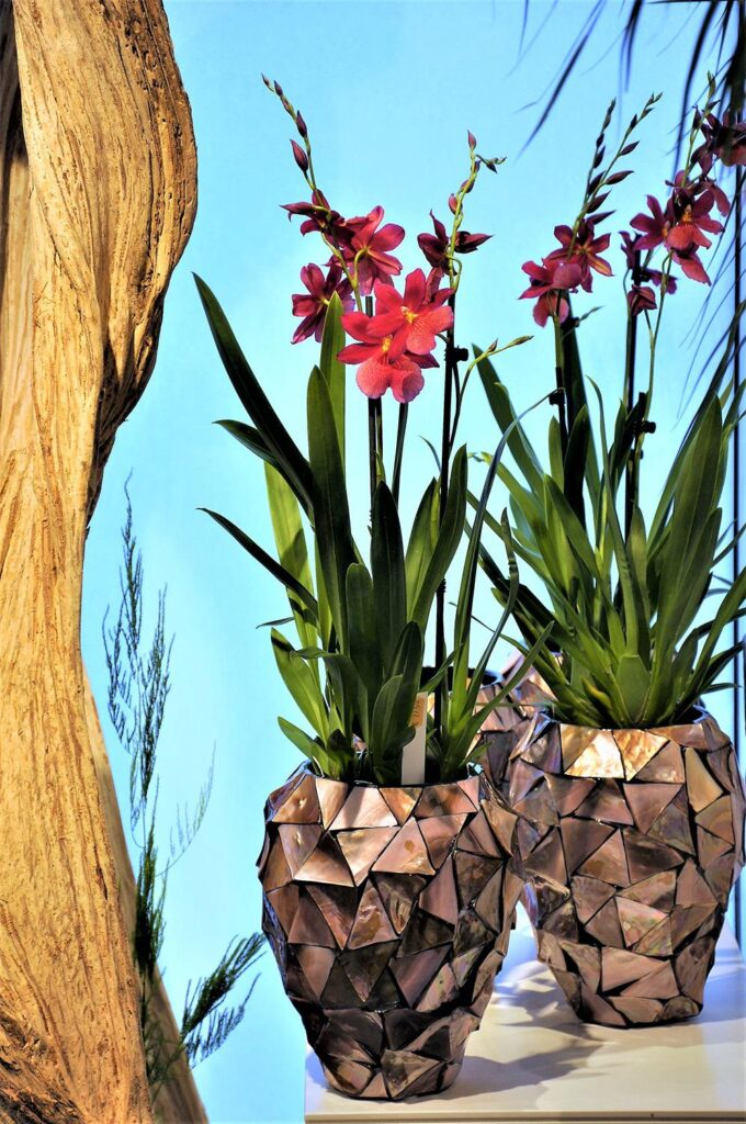 Shell Orchid Planter Brown 17x24cm Lifestyle1