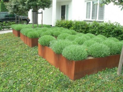 Corten Steel Square Vegetable Planter by Adezz Lifestyle5