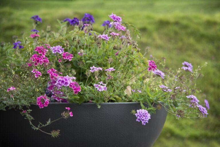 Bowl Planter2